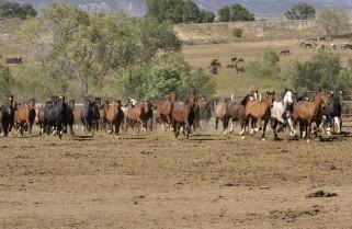 Titelstory: Wilde Mustangs – Wilde Jungs