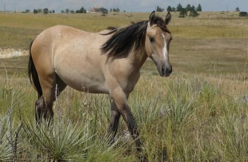 DVD: Wild Horses in Winds of Change