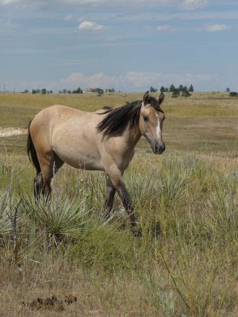 DVD: Wild Horses in Winds of Change