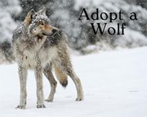 adobeawolf