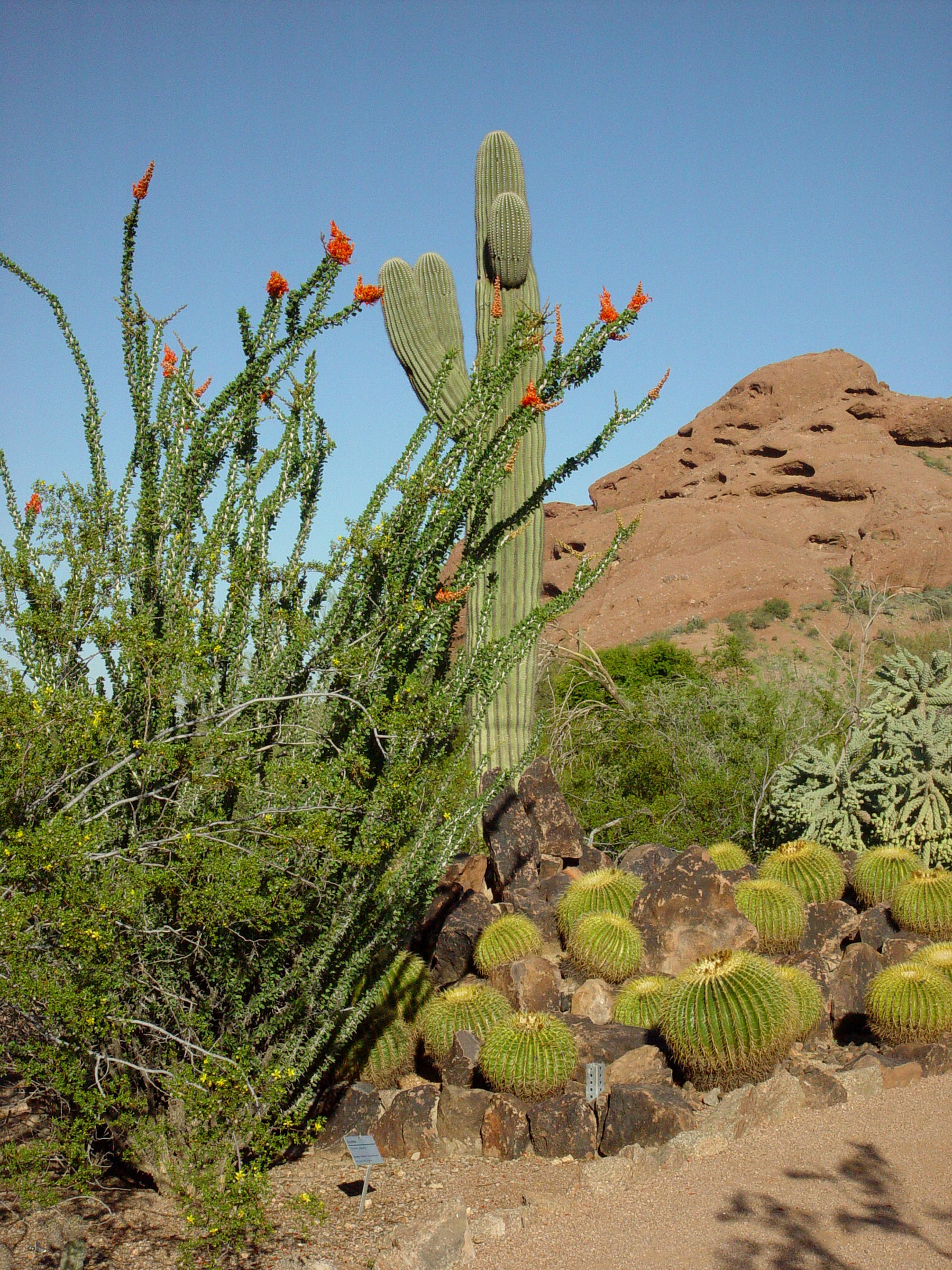 desert botanical garden phoenix - Desert Botanical Garden