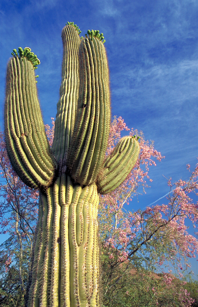 Desert Botanical Garden Phoenix Spirit Of The West Magazine
