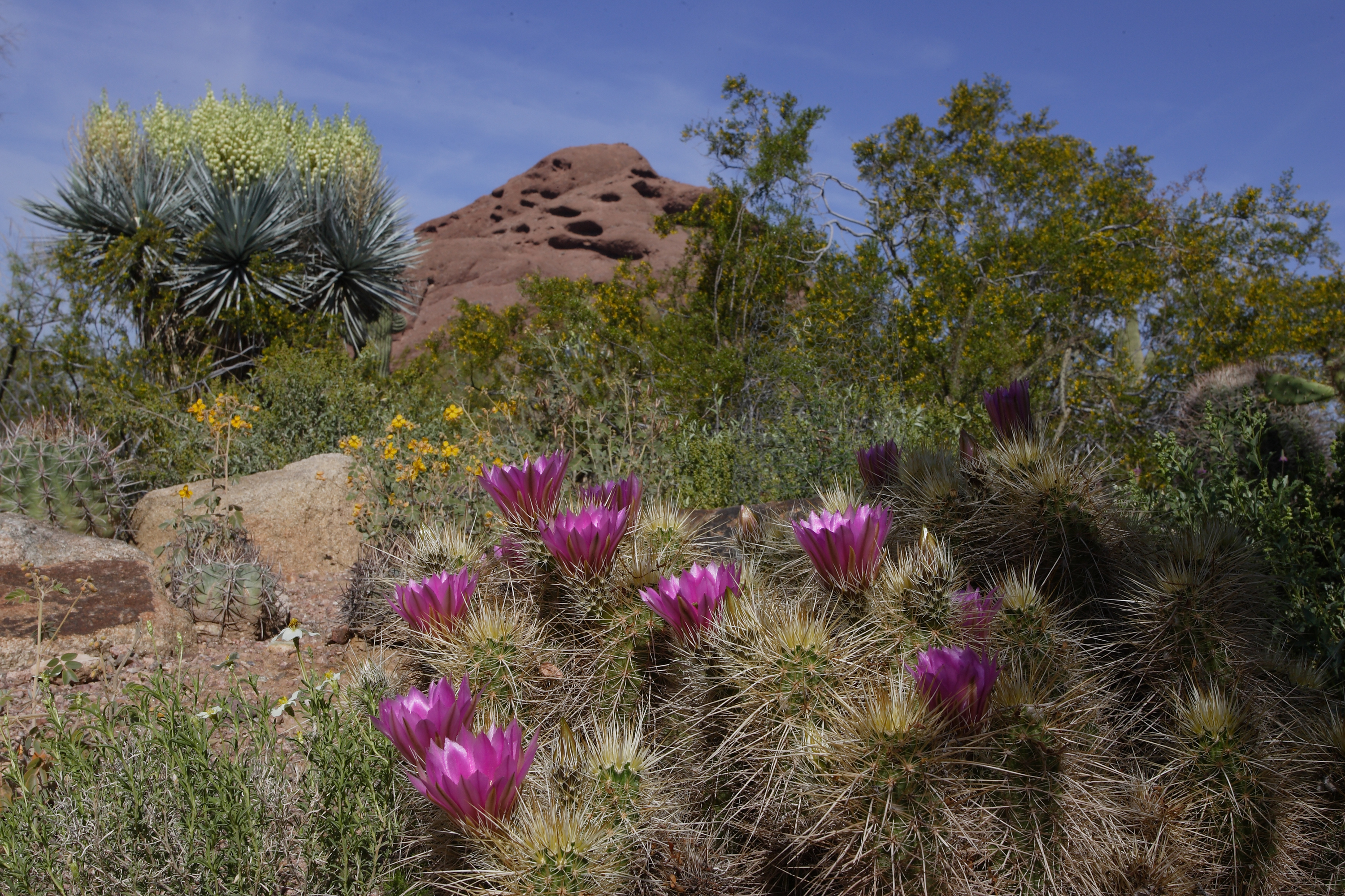 Desert Botanical Garden Phoenix - Spirit of the West Magazine