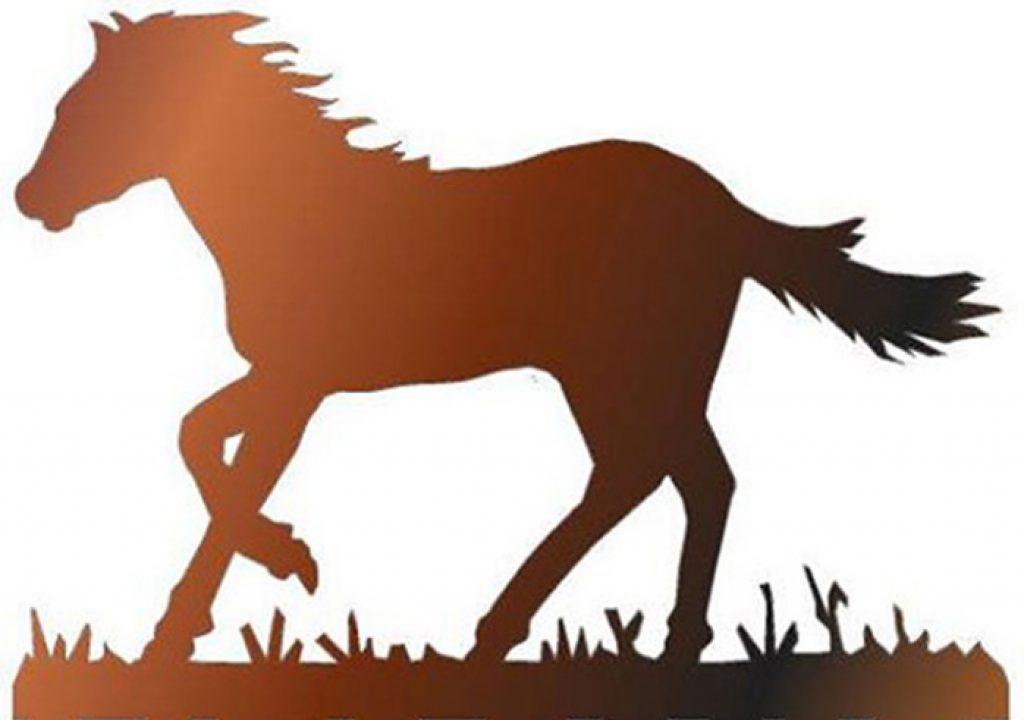 Interessantes für Cowgirls & Cowboys