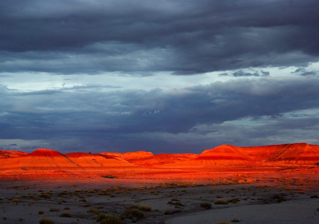 Petrified Forest Nationalpark – Versteinerte Zeugen einer fernen Vergangenheit