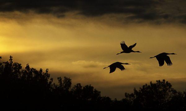 Bosque del Apache – Ein Refugium für Fauna und Flora