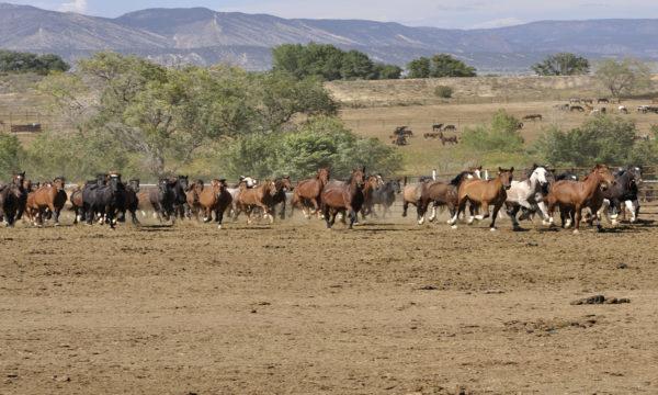 Wilde Mustangs – Wilde Jungs